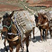 Mules for mail services