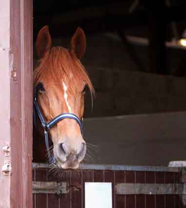 breeze the horse in a stable