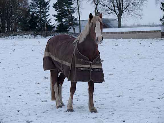 horse with rug on
