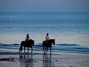 older horse riders
